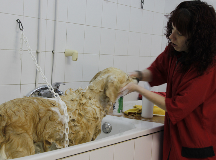 Dog and cat grooming.